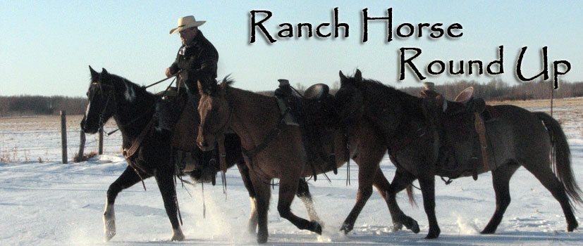 Ranch Horse Round Up Horse Sale